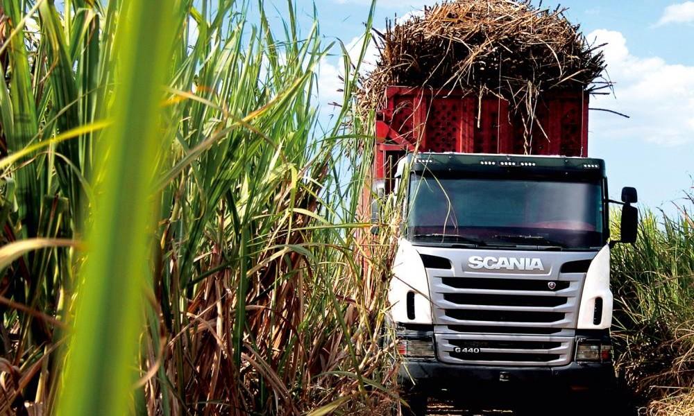 Alagoas e Sergipe: ATR fecha em baixa no mês de novembro