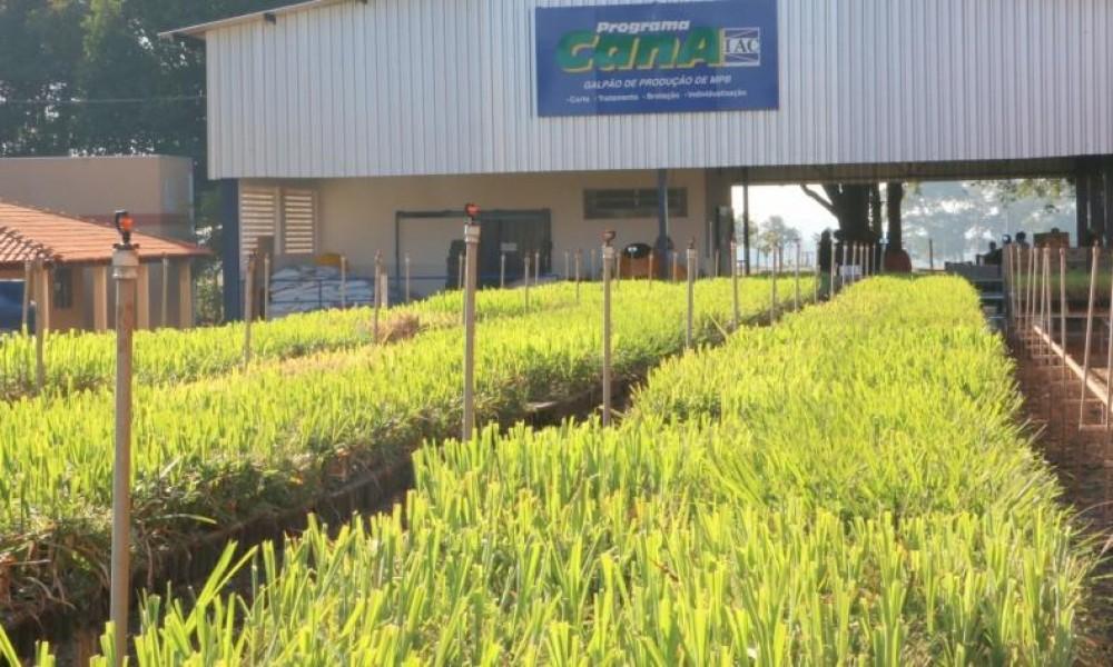 Produtor desenvolve 100% das MPBs utilizadas em suas reformas de canavial, que somam cerca de 1500 hectares anuais