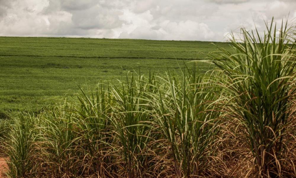 Platts analisa como a crise de covid-19 afetou mercados global e nacional de etanol